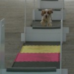 Flyball/Rally